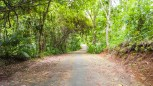 Siquijor-Bandilaan-Forest-Ecosystem-04