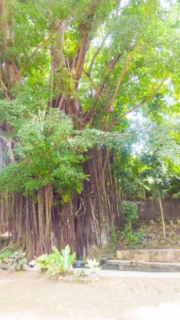 Siquijor-Century-Old-Balete-Tree-05