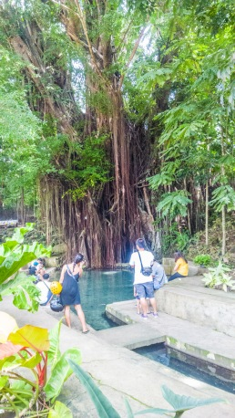 Siquijor-Century-Old-Balete-Tree-06