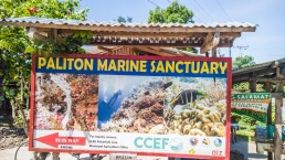 Siquijor-Paliton-Marine-Sanctuary-02