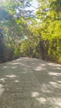 Siquijor-Salagdoong-Forest-01