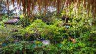 Forest-Camp-Negros-Oriental-10