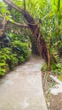 Forest-Camp-Negros-Oriental-15