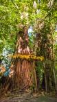 Forest-Camp-Negros-Oriental-20
