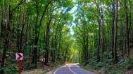 Man Made Forest Bohol 01