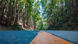Man Made Forest Bohol 03