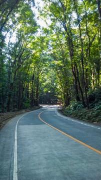 Man Made Forest Bohol 04
