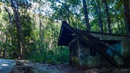 Man Made Forest Bohol 06