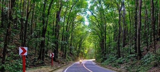 Strasse die durch den Man Made Forest in Bohol fuehrt