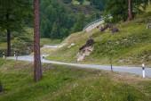 Albula Pass 53